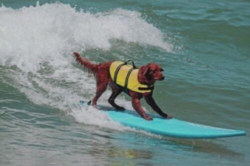 Dog-Life-Jacket-Yellow-2